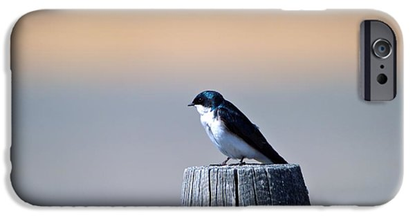 Barn Swallow iPhone Cases - Barn Swallow on a post iPhone Case by Tory Stephens