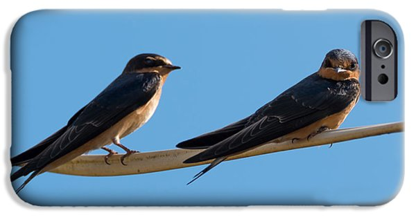 Barn Swallow iPhone Cases - Barn Swallows  iPhone Case by Jan M Holden