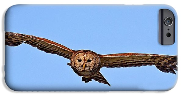 Flight iPhone Cases - Barred Owl In Flight iPhone Case by Ira Runyan