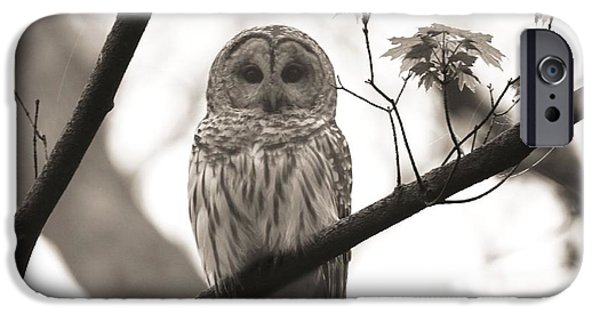 Hooters iPhone Cases - Barred Owl Sepia iPhone Case by Dan Sproul