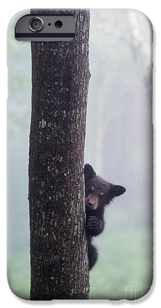 Black Bear iPhone Cases - Bashful Bear Cub - FS000230 iPhone Case by Daniel Dempster