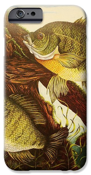 Basking Bluegills iPhone Case by Bruce Bley