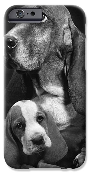 Animal Portraiture iPhone Cases - Basset Hound And Puppy iPhone Case by Ylla