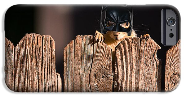 Fox Squirrel iPhone Cases - Bat Squirrel  the Cape Crusader known for putting away nuts.  iPhone Case by James BO  Insogna