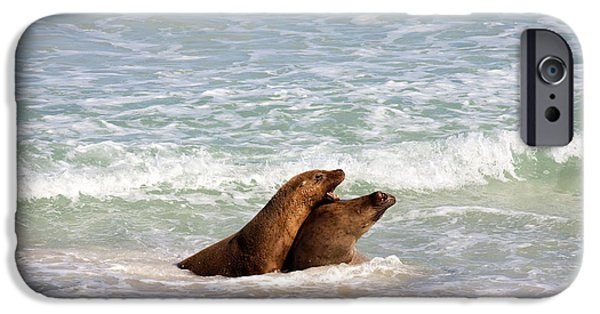 Sea Lions iPhone Cases - Battle for the Beach iPhone Case by Mike  Dawson