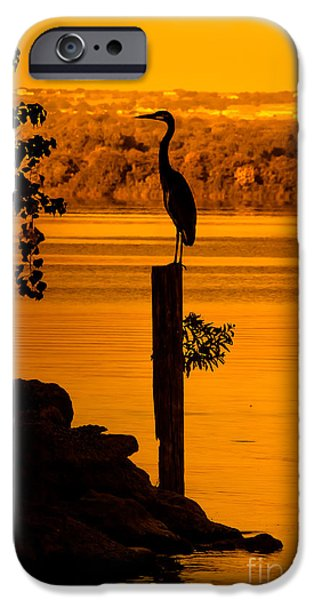 Cabin Window iPhone Cases - Bay At Sunrise - Heron iPhone Case by Robert Frederick
