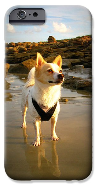 Beach Boy 1 iPhone Case by Mandy Shupp