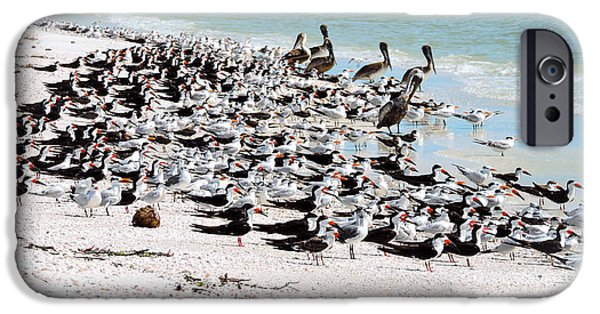 Sea Birds iPhone Cases - Beach Flock iPhone Case by Marilee Noland