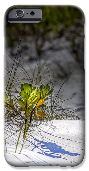 Mangrove iPhone Cases - Beach Life iPhone Case by Marvin Spates