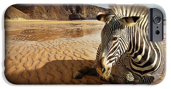 Stripes iPhone Cases - Beach Zebra iPhone Case by Carlos Caetano