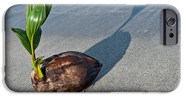 Hawaiian Food iPhone Cases - Beached Coconut Sprouting iPhone Case by Inga Spence