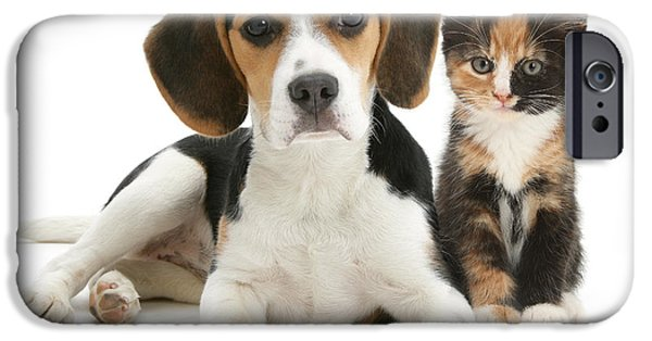 Domesticated Animals iPhone Cases - Beagle And Calico Cat iPhone Case by Mark Taylor