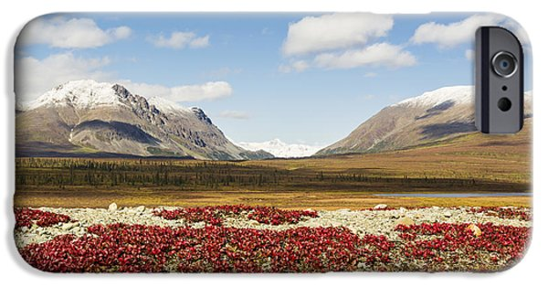 Berry iPhone Cases - Bearberry Leaves In The Foreground iPhone Case by Ray Bulson
