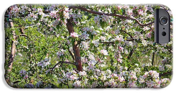 Yakima Valley iPhone Cases - Beautiful Blossoms - Digital Art iPhone Case by Carol Groenen