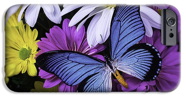 Insects Photographs iPhone Cases - Beautiful Blue Wings iPhone Case by Garry Gay