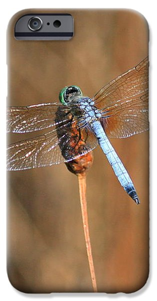 Beautiful Broken Wing iPhone Case by Carol Groenen