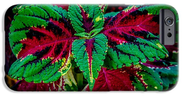 House iPhone Cases - Beautiful Coleus iPhone Case by Robert Bales