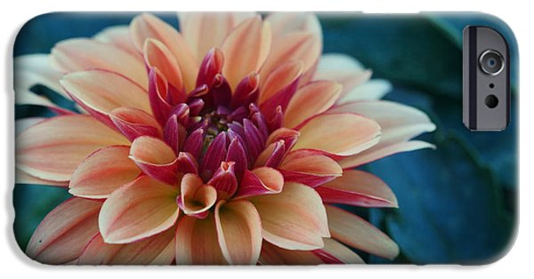 Lincoln iPhone Cases - Beautiful Dahlia 4 iPhone Case by Dimitry Papkov