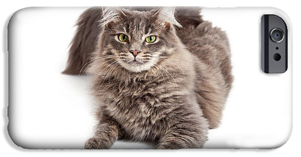 Domestic Animal iPhone Cases - Beautiful Grey Cat Laying Looking Forward iPhone Case by Susan  Schmitz