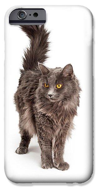 Gray Hair iPhone Cases - Beautiful Grey Color Long Hair Cat iPhone Case by Susan  Schmitz