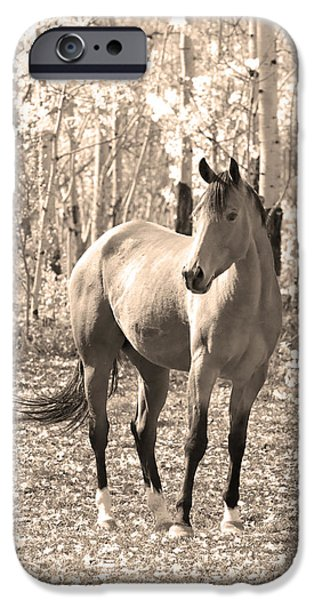 Beautiful Horse In Sepia iPhone Case by James BO  Insogna