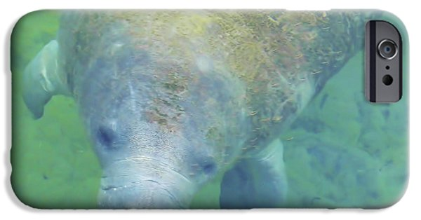 Marine iPhone Cases - Beautiful Manatee iPhone Case by D Hackett