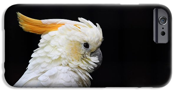 Animal Tapestries - Textiles iPhone Cases - Beautiful specimen of parrot iPhone Case by Marco Amenta