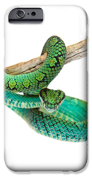 Biting iPhone Cases - Beautiful Sri Lankan Palm Viper iPhone Case by Susan  Schmitz