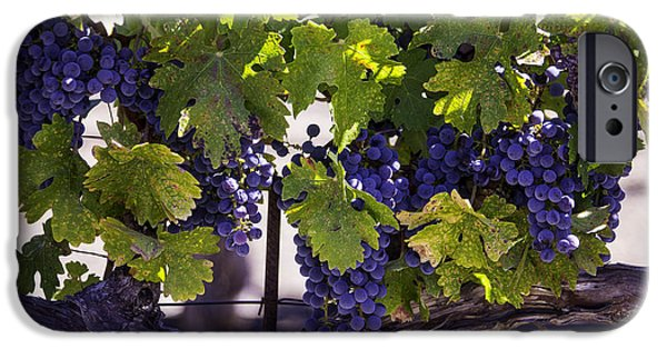 Viticulture iPhone Cases - Beautiful Vineyards iPhone Case by Garry Gay