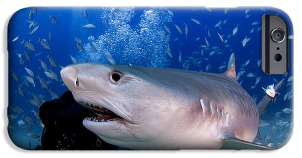 Shark Pyrography iPhone Cases - Beauty Or Beast  iPhone Case by Ricardo  Ramos