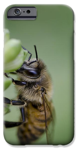 Busy Bee iPhone Case by Andrea Silies