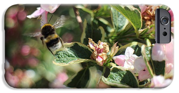 Orsillo iPhone Cases - Bee iPhone Case by Christopher Valentine