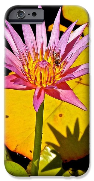 Buddhist iPhone Cases - Bee Enjoying the Lotus Bloom iPhone Case by Joe Wyman