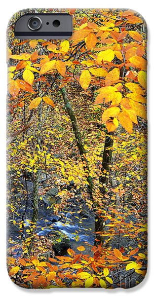 Beech Leaves Birch River iPhone Case by Thomas R Fletcher