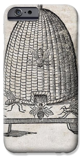Bees And Beehive, 17th Century Artwork iPhone Case by Middle Temple Library