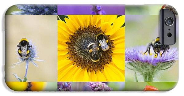 Fauna iPhone Cases - BeeTastic iPhone Case by Tim Gainey