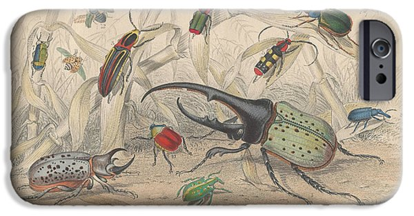 Insects Drawings iPhone Cases - Beetles iPhone Case by Oliver Goldsmith