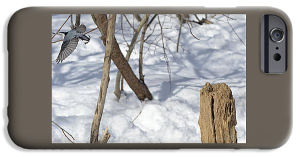 Animals Photographs iPhone Cases - Before you disappear pretty Nuthatch iPhone Case by Asbed Iskedjian