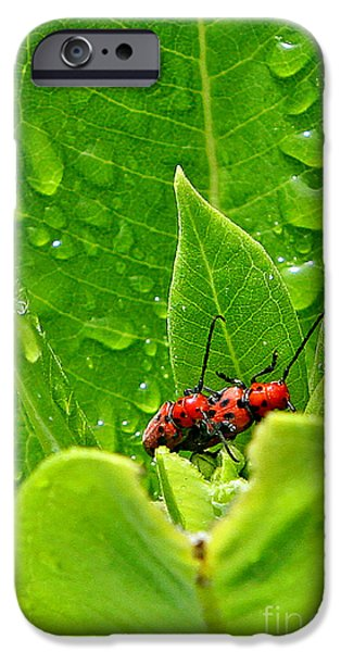Rainy Day iPhone Cases - Behind the Leaves iPhone Case by Marle Nopardi