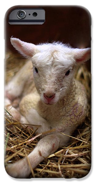 Behold the Lamb iPhone Case by Linda Mishler