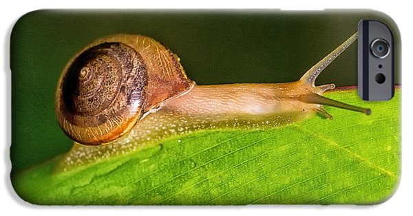 Little iPhone Cases - Being a Gastropod The Purist I I iPhone Case by Darby Donaho