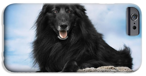 Black Dog iPhone Cases - Belgian Sheepdog Portrait 10 iPhone Case by Wolf Shadow  Photography