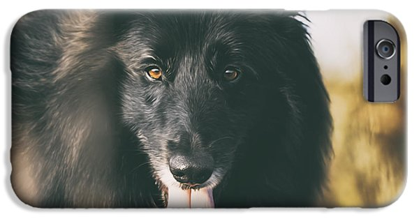 Black Dog iPhone Cases - Belgian Sheepdog Portrait 11 iPhone Case by Wolf Shadow  Photography