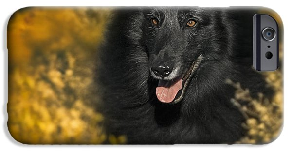 Black Dog iPhone Cases - Belgian Sheepdog Portrait 5 iPhone Case by Wolf Shadow  Photography
