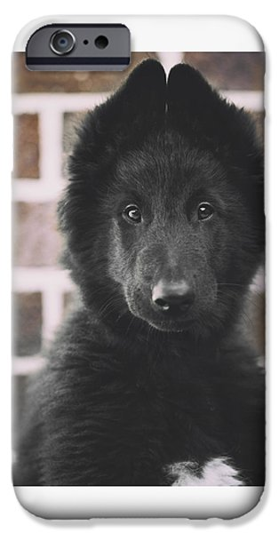 Puppies iPhone Cases - Belgian Sheepdog Puppy Portrait iPhone Case by Wolf Shadow  Photography