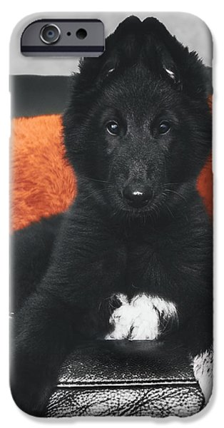 Working Dog iPhone Cases - Belgian Sheepdog Puppy iPhone Case by Wolf Shadow  Photography