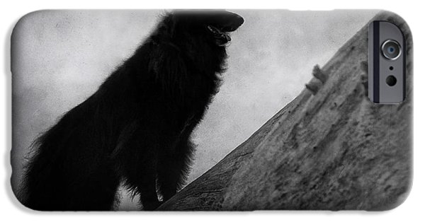 Black Dog iPhone Cases - Belgian Shepherd Artwork 8 iPhone Case by Wolf Shadow  Photography