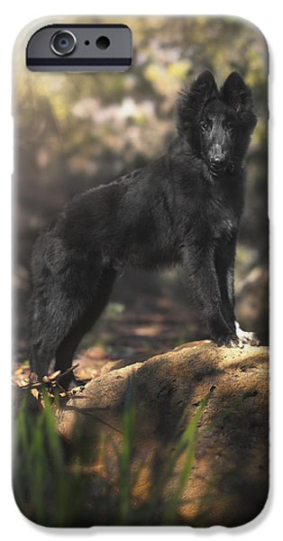 Dogs iPhone Cases - Belgian Shepherd Puppy in the woods iPhone Case by Wolf Shadow  Photography