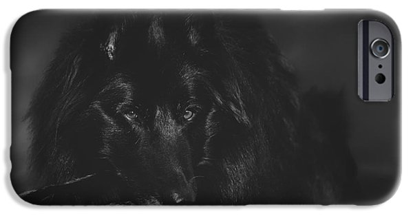 Black Dog iPhone Cases - Belgian Shepherd Artwork 10 iPhone Case by Wolf Shadow  Photography