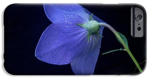 Balloon Flower iPhone Cases - Bell Flower From Behind iPhone Case by Douglas Barnett